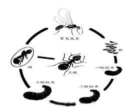 蚂 蚁的防 制