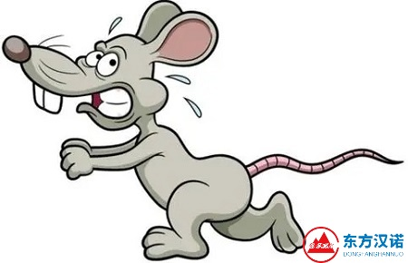 【除虫灭鼠公司,简单5步教你如何灭鼠!—北京专业除虫灭鼠公司东方汉诺】