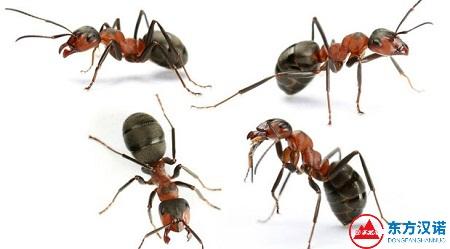 家里有蚂蚁怎么办,消灭蚂蚁,试试这5种土方法-东方汉诺-北京快讯