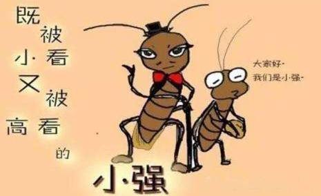 """【杀蟑螂公司】用蟑螂告白遭拒,越南男生""""重口味""""告白图片"""