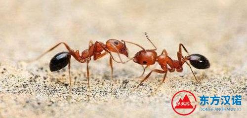 【灭蚂蚁公司】东方汉诺—北京快讯