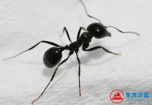 【家里有蚂蚁怎么办】东方汉诺—北京快讯