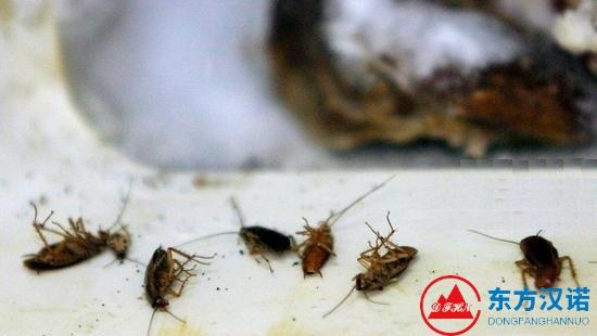 【杀灭蟑螂公司】东方汉诺—北京快讯