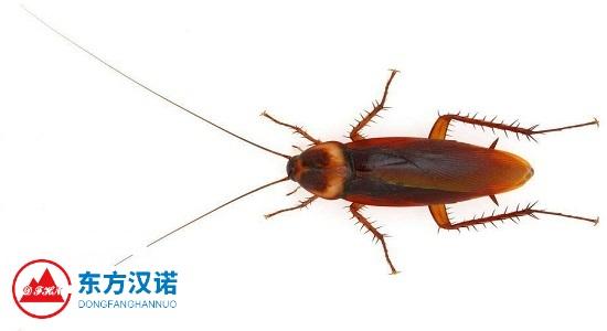 【灭蟑螂公司】东方汉诺—北京快讯
