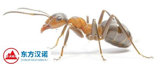 【如何消灭蚂蚁】东方汉诺—北京快讯