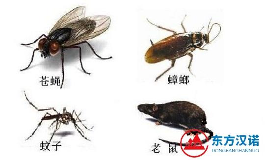 【灭虫公司】东方汉诺—北京快讯