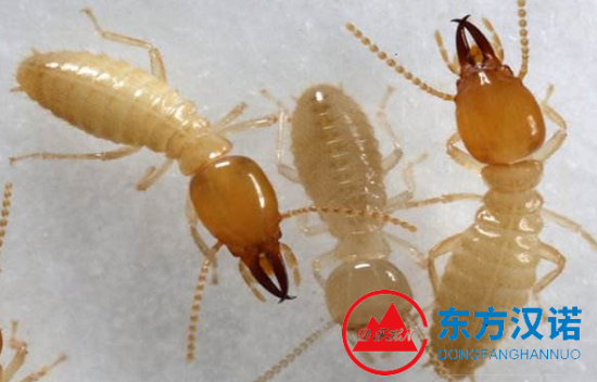 【白蚁防治】东方汉诺—北京快讯
