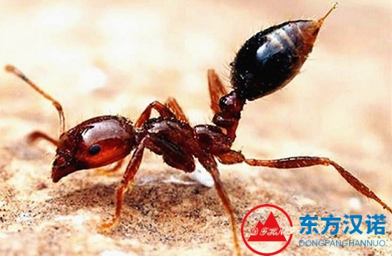 【除灭蚂蚁公司】东方汉诺—北京快讯